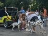 006 A Cuban Dog Show