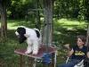 017 A Cuban Dog Show