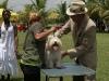 019 A Cuban Dog Show
