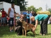 """023 A Malinois (Belgian Shepherd): winner of the """"puppy award"""" from among all the breeds."""