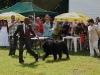 025 A Cuban Dog Show