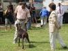 027 A Cuban Dog Show