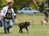 030 A Cuban Dog Show