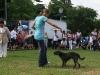 032 A Cuban Dog Show
