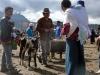 31- Animal fair in Otavalo.