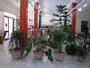 3-Venta de plantas ornamentales