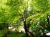 14-helecho-arborescente
