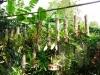 21-orquideas-catleyas