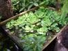 27-plantas-acuaticas