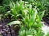 34-semillero-de-palmas