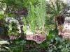 43-variedad-de-polipodium