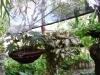 56-begonia-y-epicea