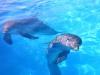 12-delfines
