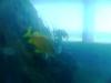 21-pez-del-estanque
