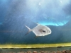 25-peces-del-tiburonario