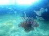 26-pez-leon
