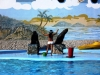 9-show-con-animales-marinos