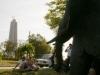 Elefantes 2 parque de comunicaciones 002.jpg