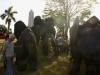 Elefantes 2 parque de comunicaciones 003.jpg