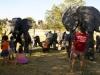 Elefantes2 parque de comunicaciones 001.jpg