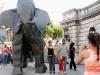 elefante 062.jpg