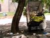 12-carrito-y-palomas
