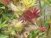 bromelias sobre un tronco seco