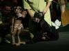 mowgli-el-mordido-por-los-lobos-teatro-la-proa