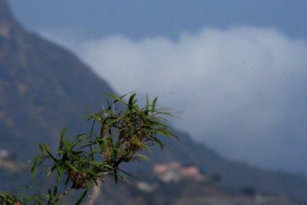 Monte Ávila, in Caracas, Venezuela. 1