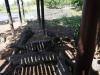 cocodrilos-adultos-en-criadero