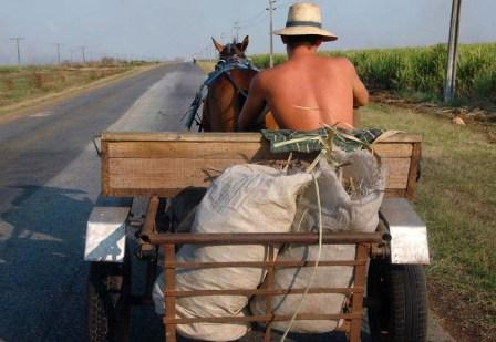 Cuban farmers carry on as they have for decades.  Photo: Bill Hackwell