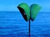 redial-verde