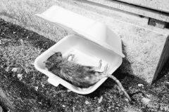 raton-scaled