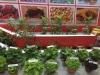 expo-vegetales3