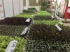 vegetales-mini-plantados