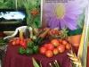 vegetales-variados