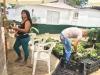 venta-planta-y-semillas