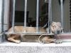 Behind bars. 125