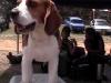 Cuban dog breeders show their breeds