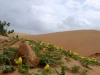 A visit to the desert in Falcon, Venezuela