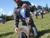 A nineteen-month old Dexter (Italian Greyhound), Best of the Breed, MB, Excellent, owned by Maria C. Ramos