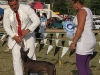 Domino del Real, the 12 year-in-a-row Grand Champion of Cuba and Absolute Champion of the first monographic of the breed in Cuba, bids farewell to the concourse.  Erick is his owner.