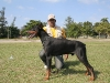 Yony of the Green Cayman Club, Best of the Breed, second of the group (male)