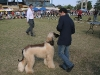 Other breeds present at the competition