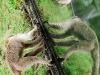 Monkeys at the Caracas Zoo.