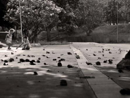Fall in a Havana Park.  Photo: Caridad