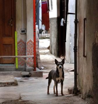 Keeping Guard, photo by Caridad