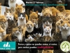 PAC postcard from International Animal Sterilization Day