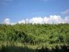 04-Marabu brush making the landscape monotonous.