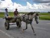 09- An araña : a rustic horse-drawn wagon.
